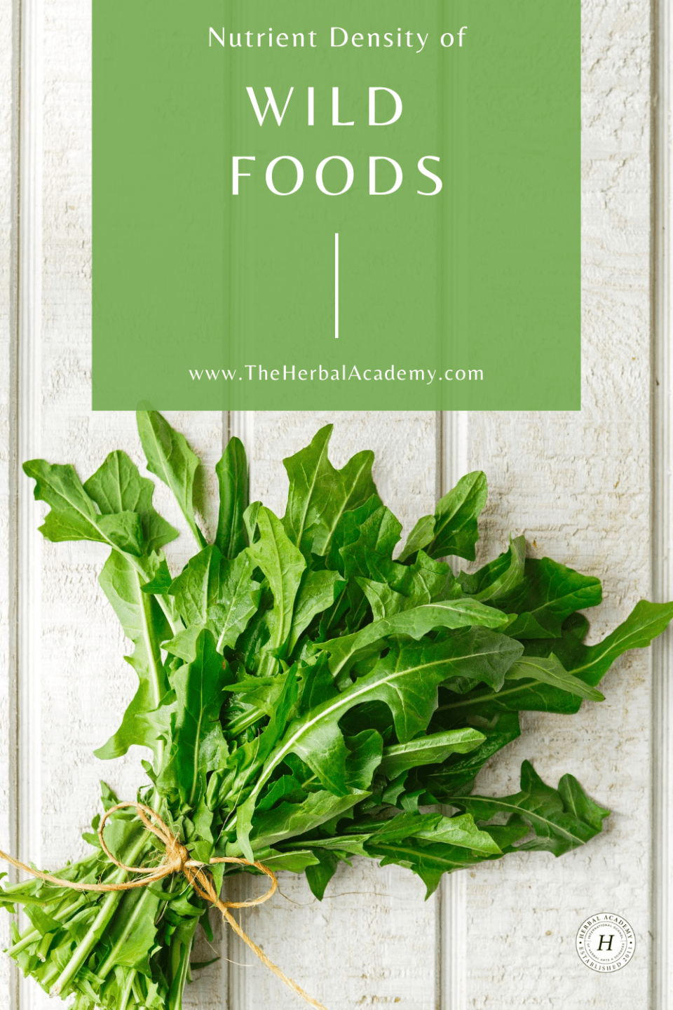 A Foraged Feast: Nutritional Value of Edible Wild Food | Herbal Academy | Learn about the nutritional density of edible wild food varieties, like dandelion, compared to their cultivated counterparts.