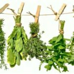 cropped-drying-herbs-free-site.jpg