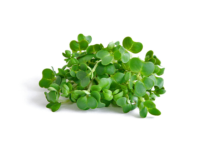 Bunch of Watercress