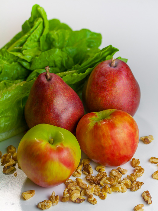 Beautiful red pears, apples, lettuce and walnuts, ready to be turned into a healthy and delicious salad!