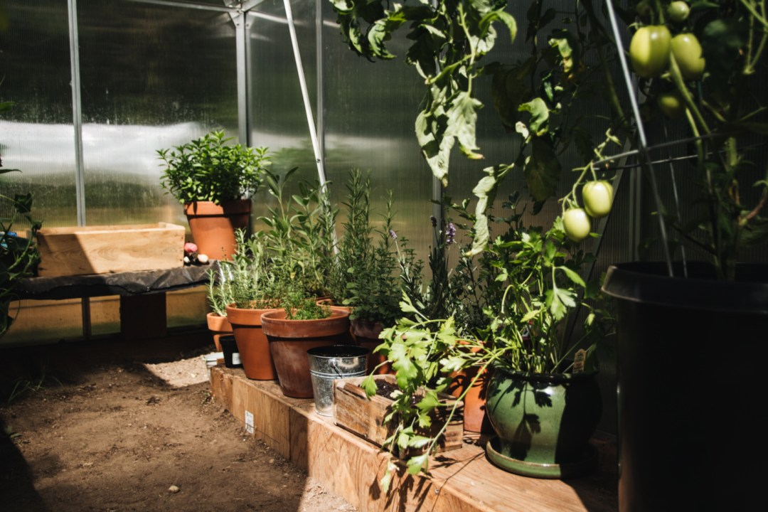 my garden full of herbs in our greenhouse