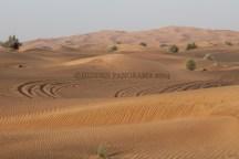 Desert Safari Adventure – Not To Be Missed in Dubai