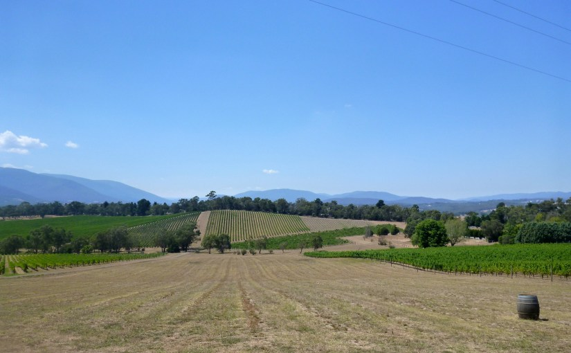 Panoramic View : Killara Estate, Yarra Valley