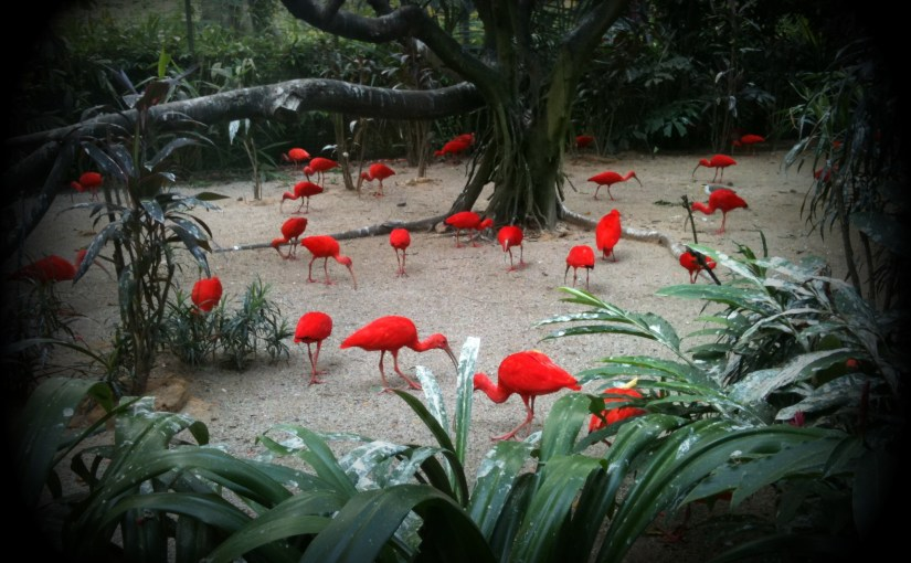 Life Of Others : Jurong Bird Park – Scarlet Ibis