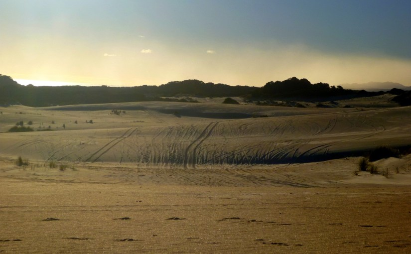 Panoramic View : Henty Sand Dunes