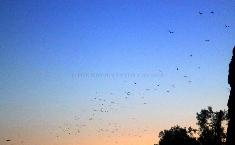 Life Of Others : Windjana Gorge – Fruit Bats