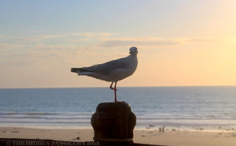 Life Of Others : Broome Town Beach & Cable Beach – Silver Gull
