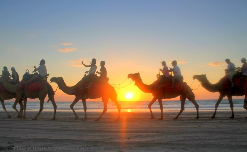 Life Of Others : Cable Beach – Camels