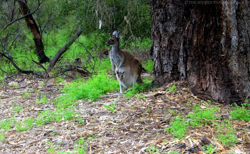 Yanchep National Park – One of the Oldest Park in Western Australia