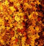 "by Johannes Stotter - ""Autumn"""