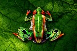 by Johannes Stotter - The following frog body art was created using 5 people.