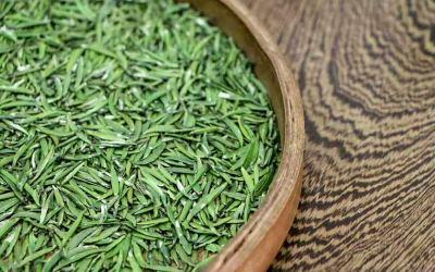 Green Tea Health Benefits: Why Drink Green Tea?