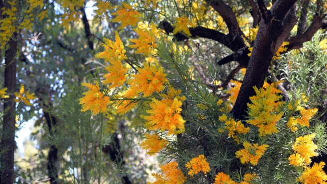 tree with bright orange flowers