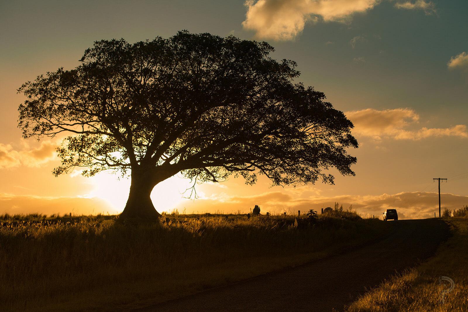 Sunset at Conondale National Park in Queensland, Australia
