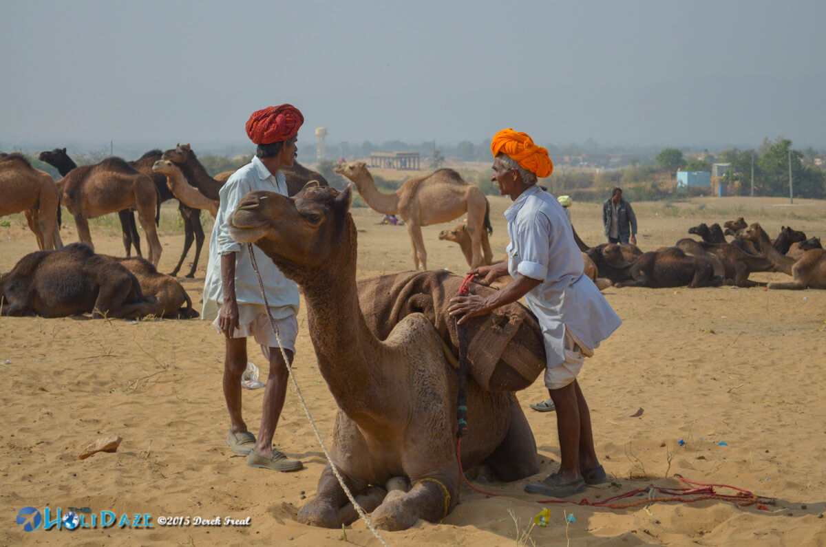Pushkar Camel Fair 2015