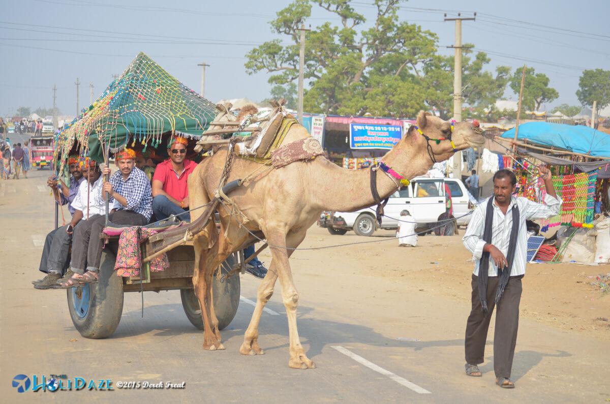 Camel taxi at the Pushkar Camel Fair 2015