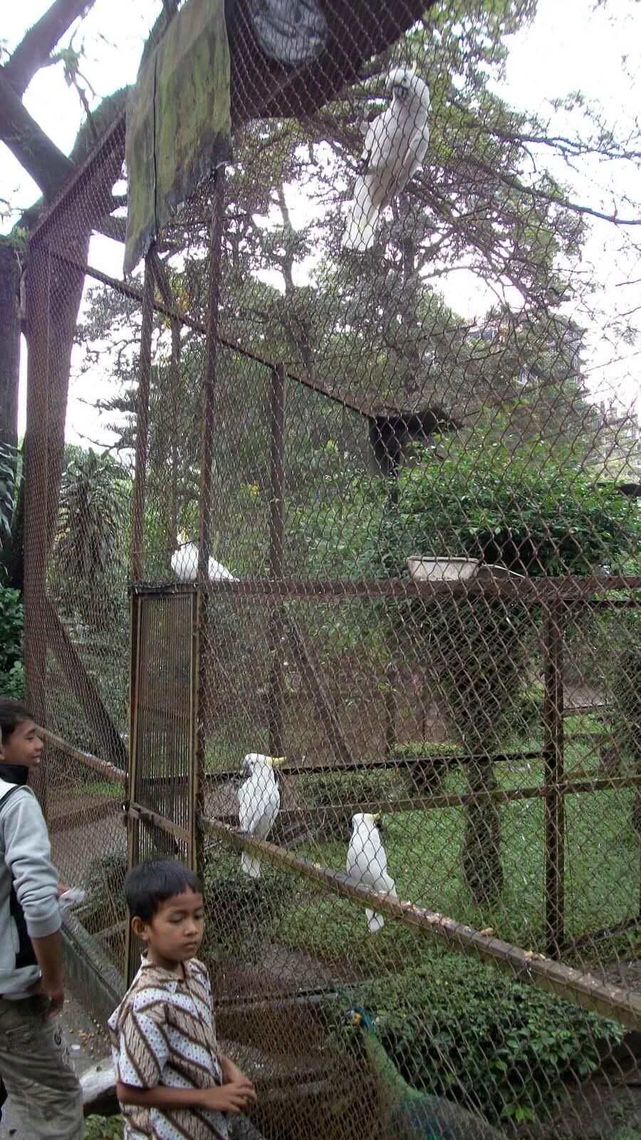 Starving animals beg for food at Kebun Binatang Bandung Zoo