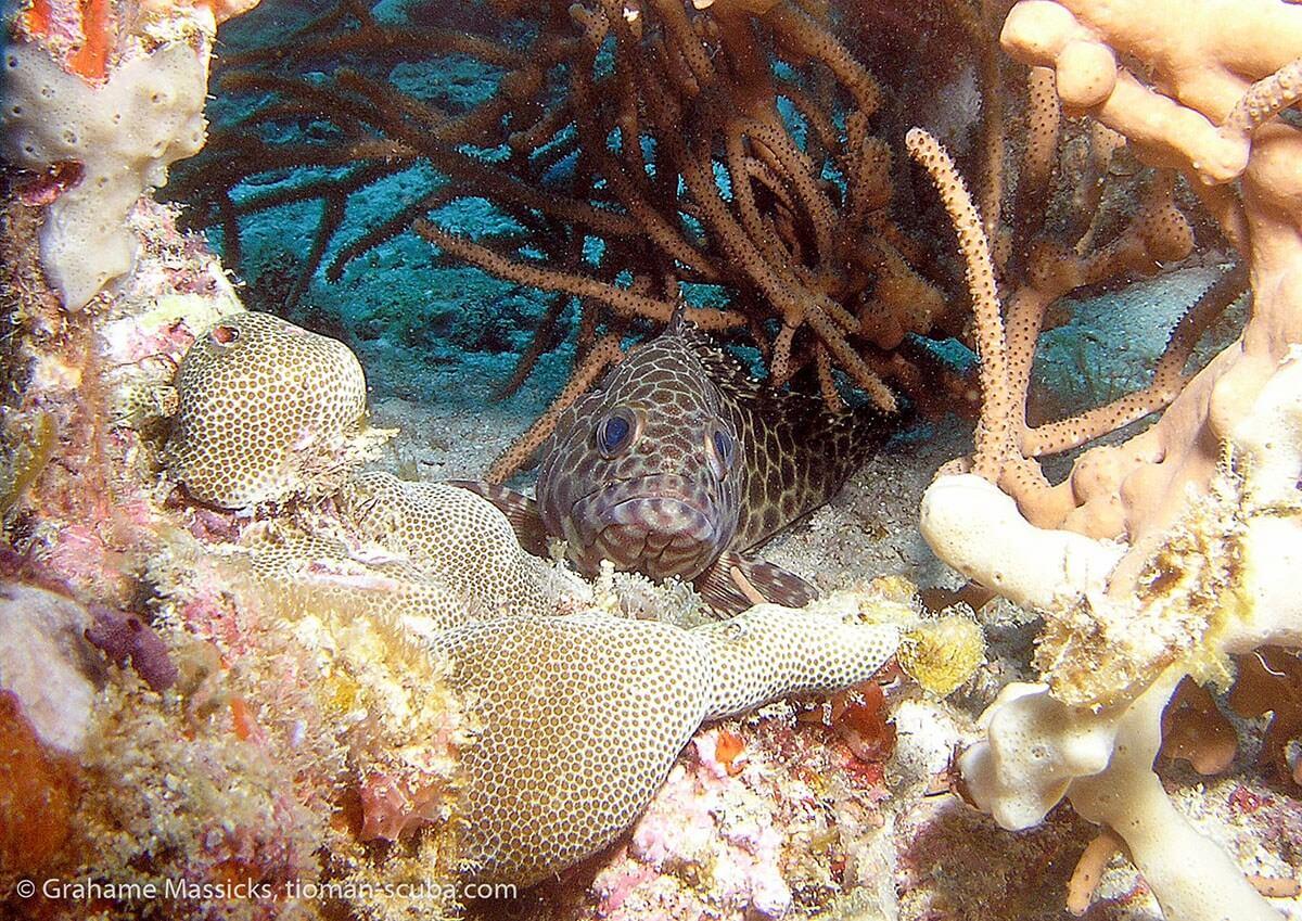 Hard coral hideaway at Salang, Tioman Island