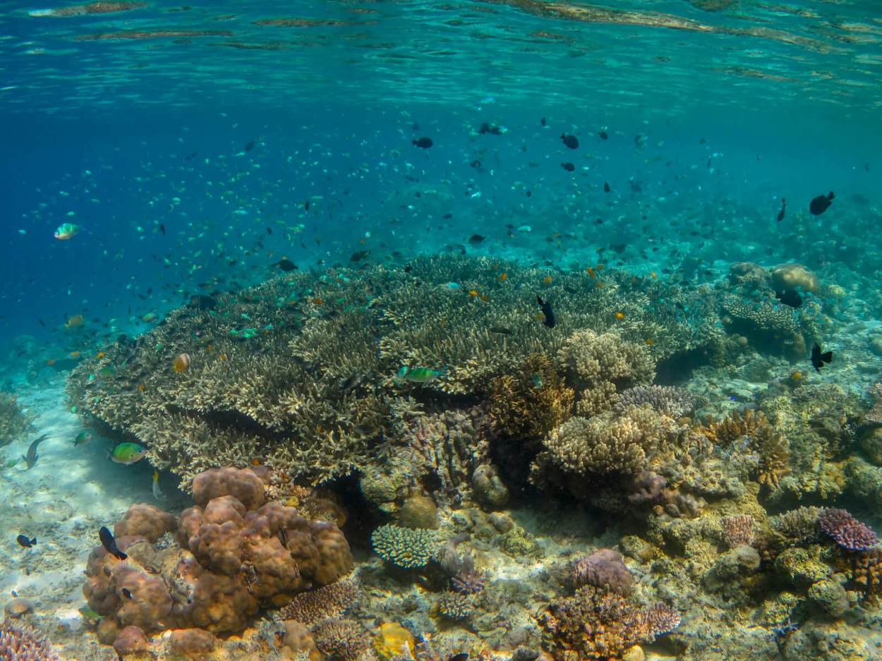 Scuba diving the coral reef at Mataking Island off the coast of Semporna, Sabah