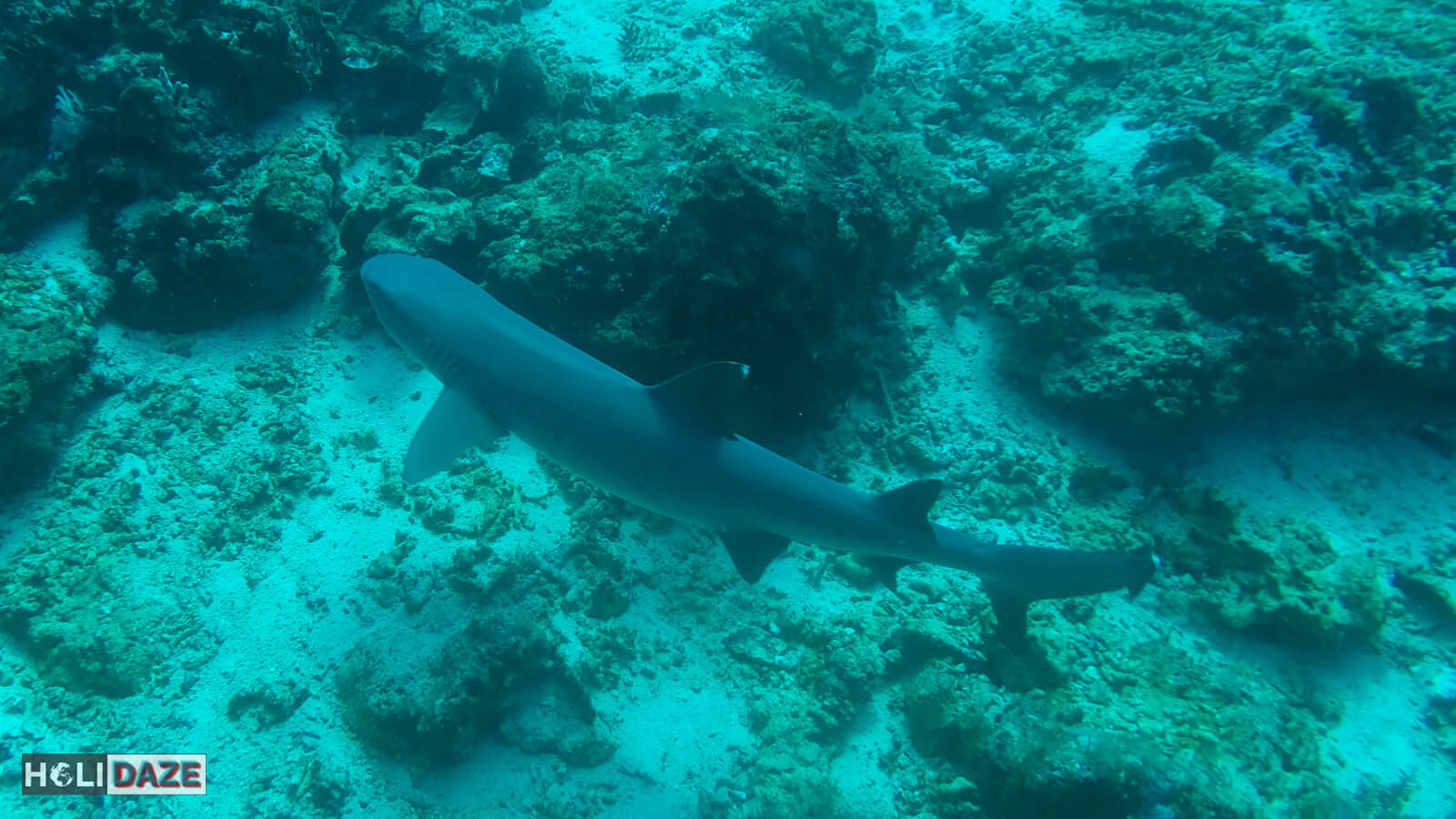 Shark spotted while diving at Sipadan Island in Sabah, Malaysia