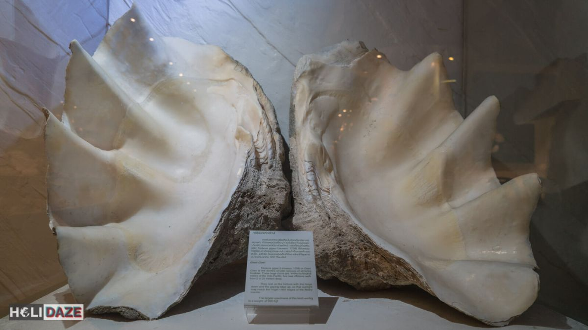 Giant clam at the Bangkok Seashell Museum in Thailand