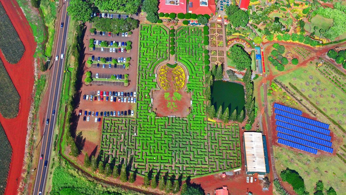 The world's largest maze is the Dole Pineapple Maze on Oahu, Hawaii
