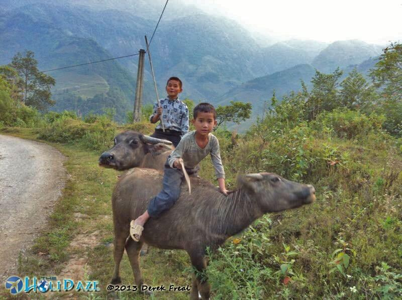Kids riding a water buffalo in Sapa, Vietnam
