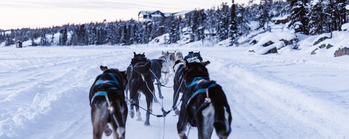 Dogsledding in Yellowknife, Canada