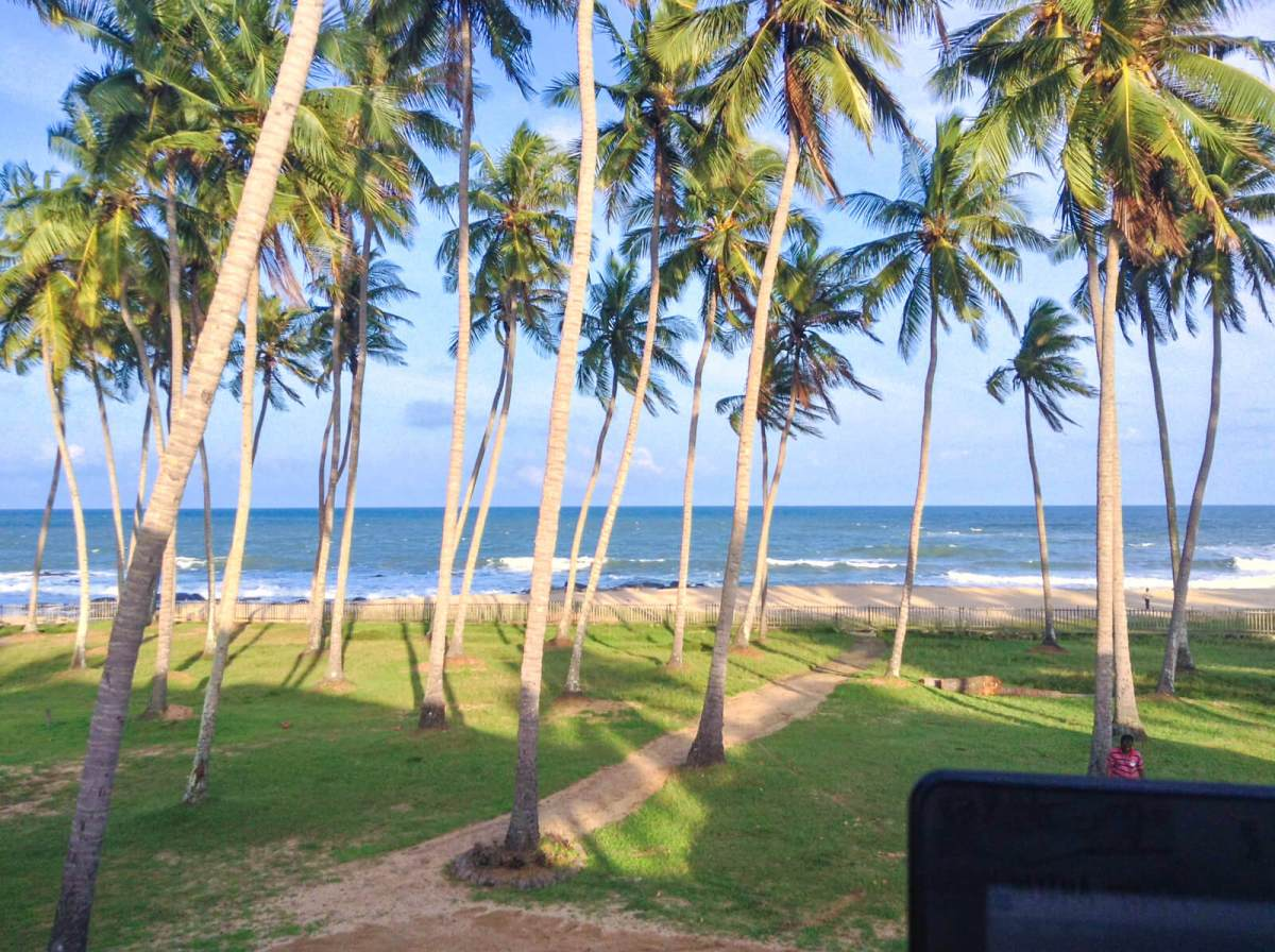 View from my office this week -- the palm trees and sandy shores of Arugam Bay, Sri Lanka