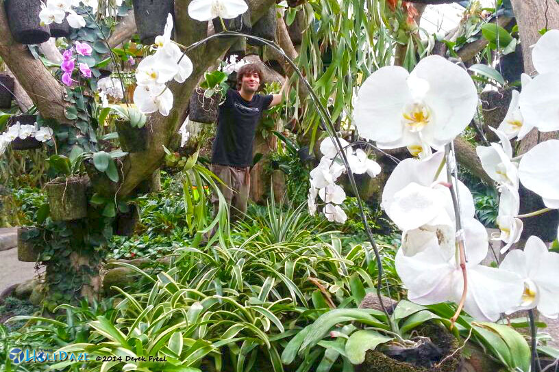 Spring Orchids In Bloom