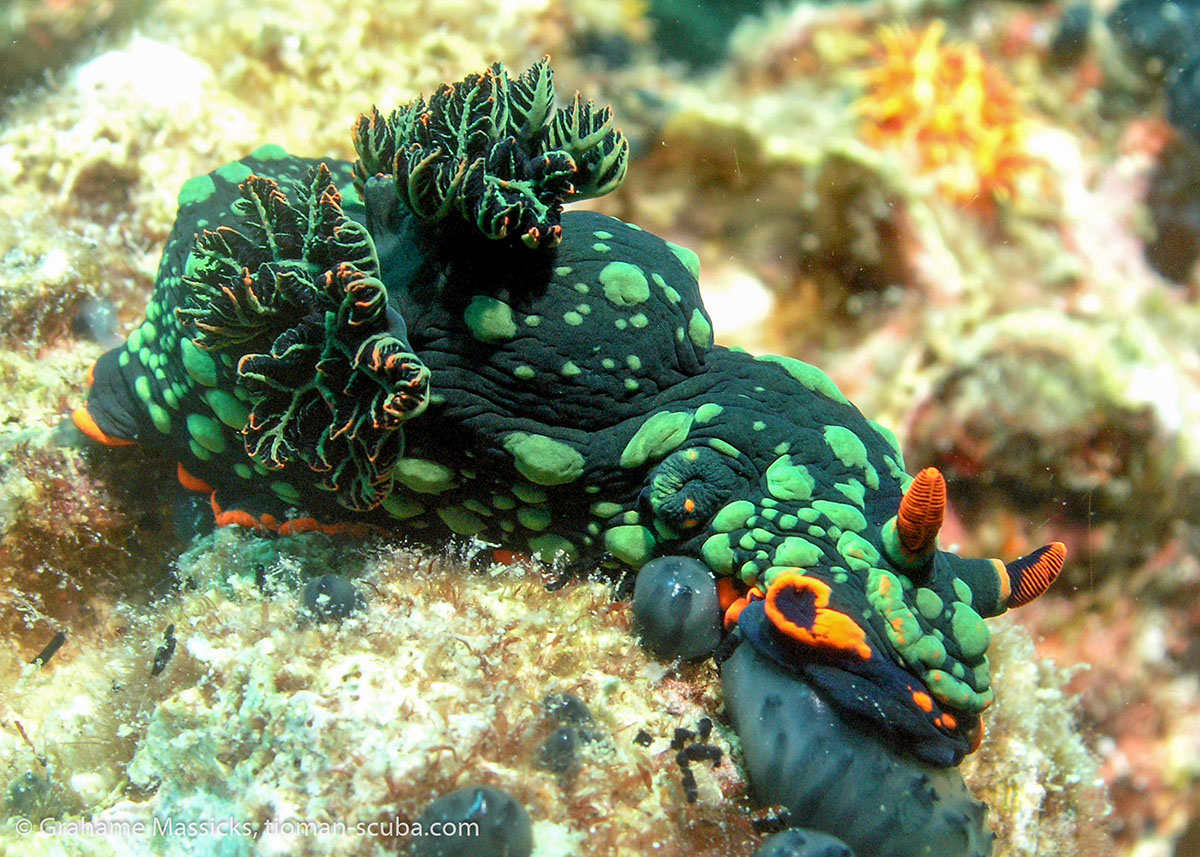 Breathtaking Underwater Photos From Tioman Island, Malaysia