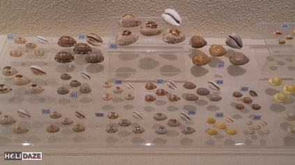 Thousands of seashells at Bangkok Seashell Museum in Thailand