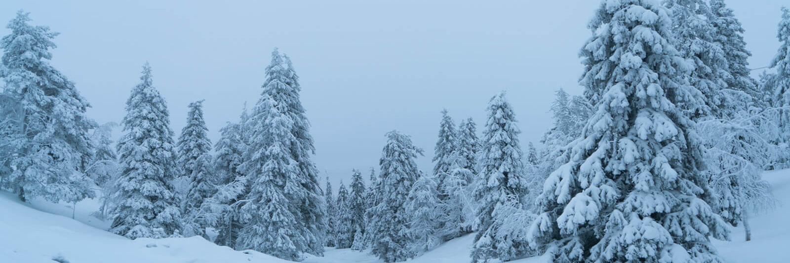 Frozen forest in Lapland, northern Finland