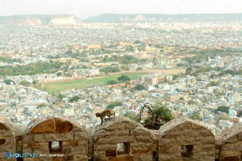 View from Nahargarh Fort in Jaipur, Rajasthan, India