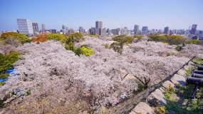 5 Fun Things To Do In Fukuoka, Japan