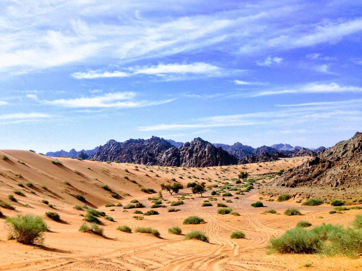 Obscure travel facts about Saudi Arabia: it is the only country with no rivers, probably because it is 95% desert.