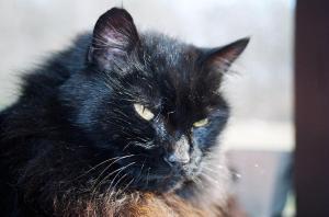 The Queen Cat herself, Scarlet