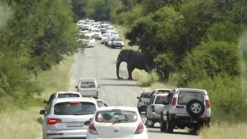 np_elephant
