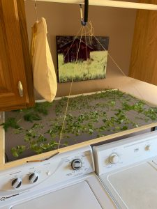 Drying Herbs the Easy Way