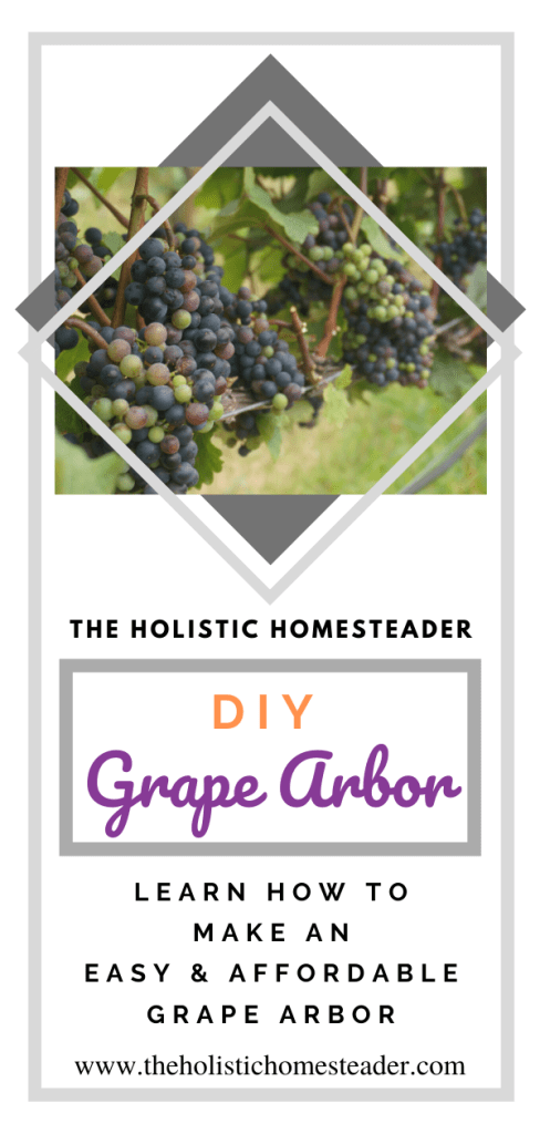 Easy DIY Grape Arbor