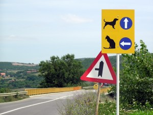 Cat & dog road sign, Kosovo