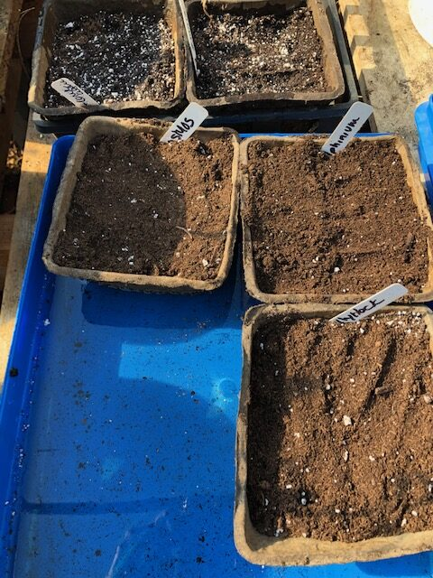bottom water seeds to germinate