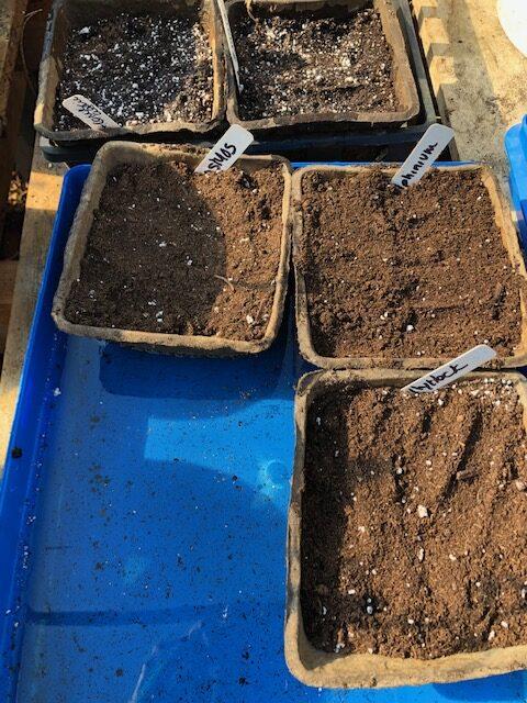 bottom water seeds to germinate