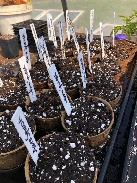 Start squash and cucumbers in individual peat pots