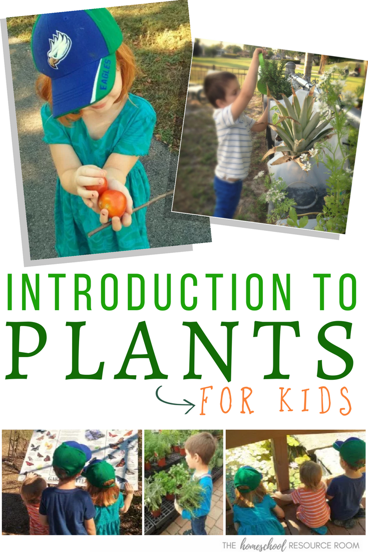 Introduction to plants for kids - ideas, activities, books, and resources to introduce plants, gardening, and growing to kids. Preschool, kindergarten, elementary grades.
