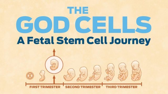 The God Cells is a film about fetal stem cells