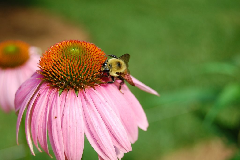 Enemies To Bees Pesticides And Hybridized Plants The