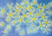 Stars (cover) - available blank card only (21x15cm)
