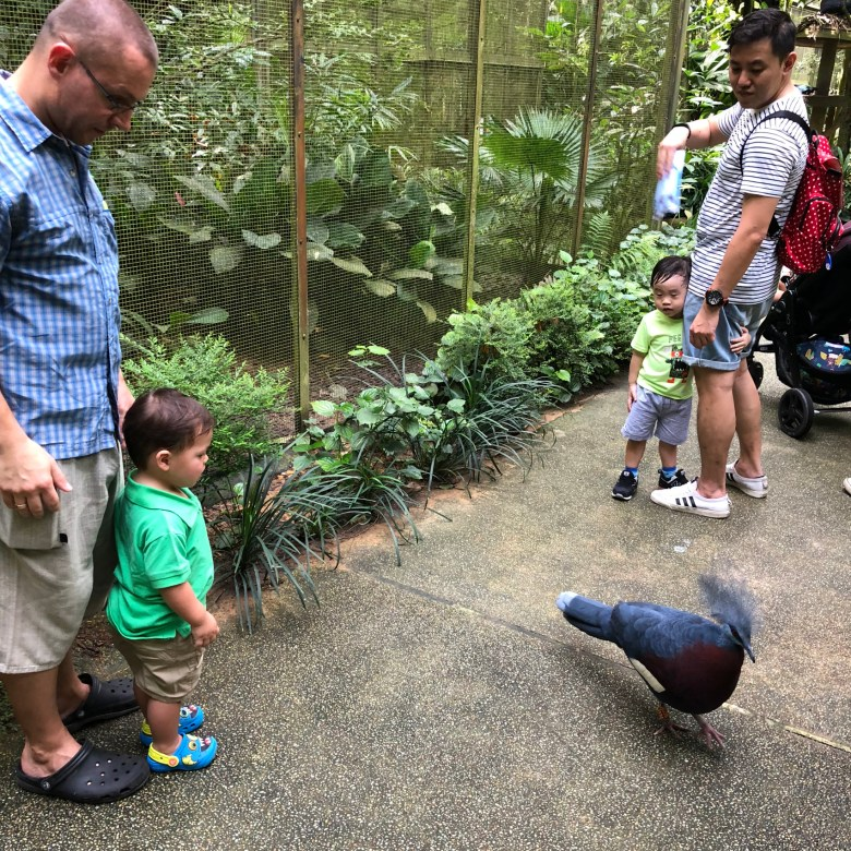family fun in Singapore Bird Park
