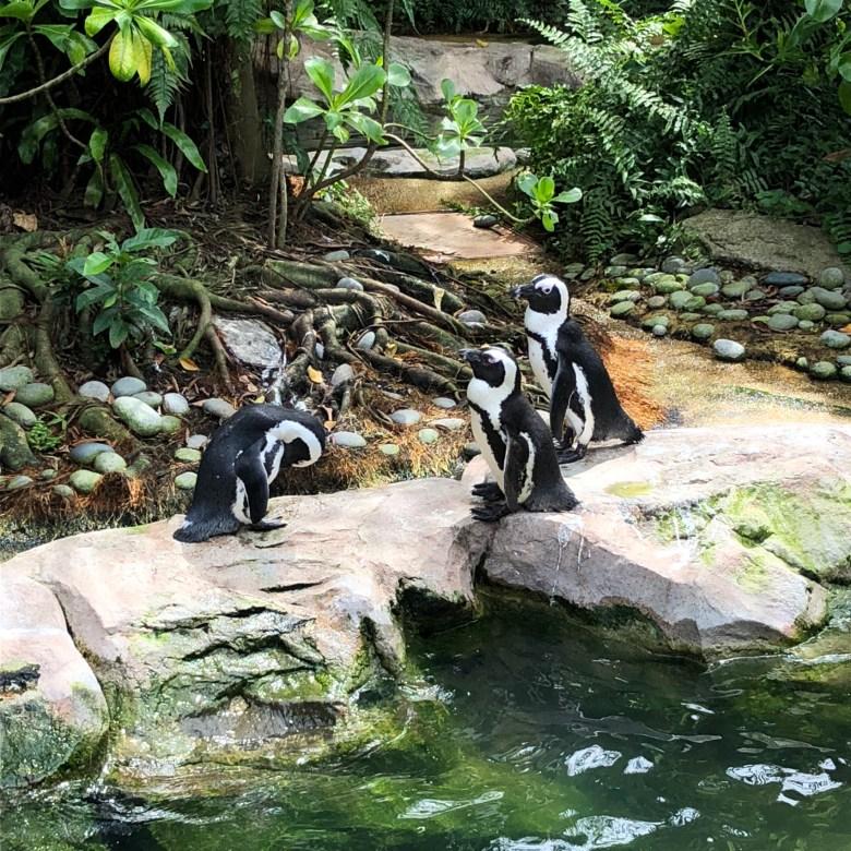 penguins at bird park